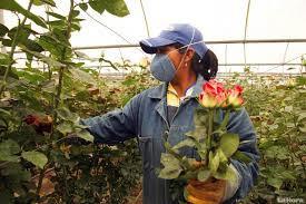 trabajadoras-y-trabajadores-de-flores